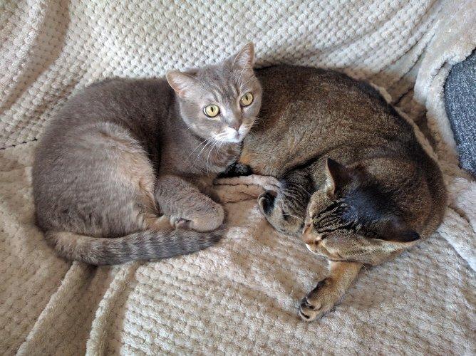 My cats Mandarina and Gandalf