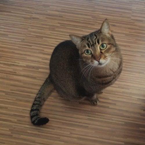 My cat Mandarina